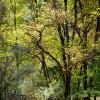 Trees In Meadow
